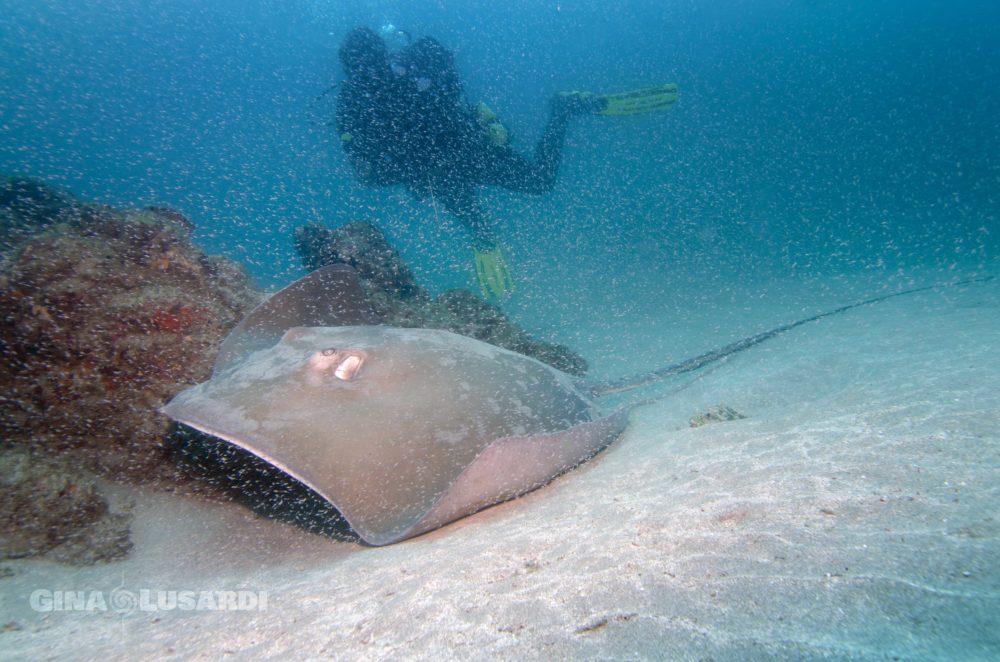 divemaster scuba diving in Cano