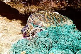 Turtle and Fishing nets