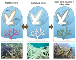 Healthy coral vs Bleached vs Dead coral