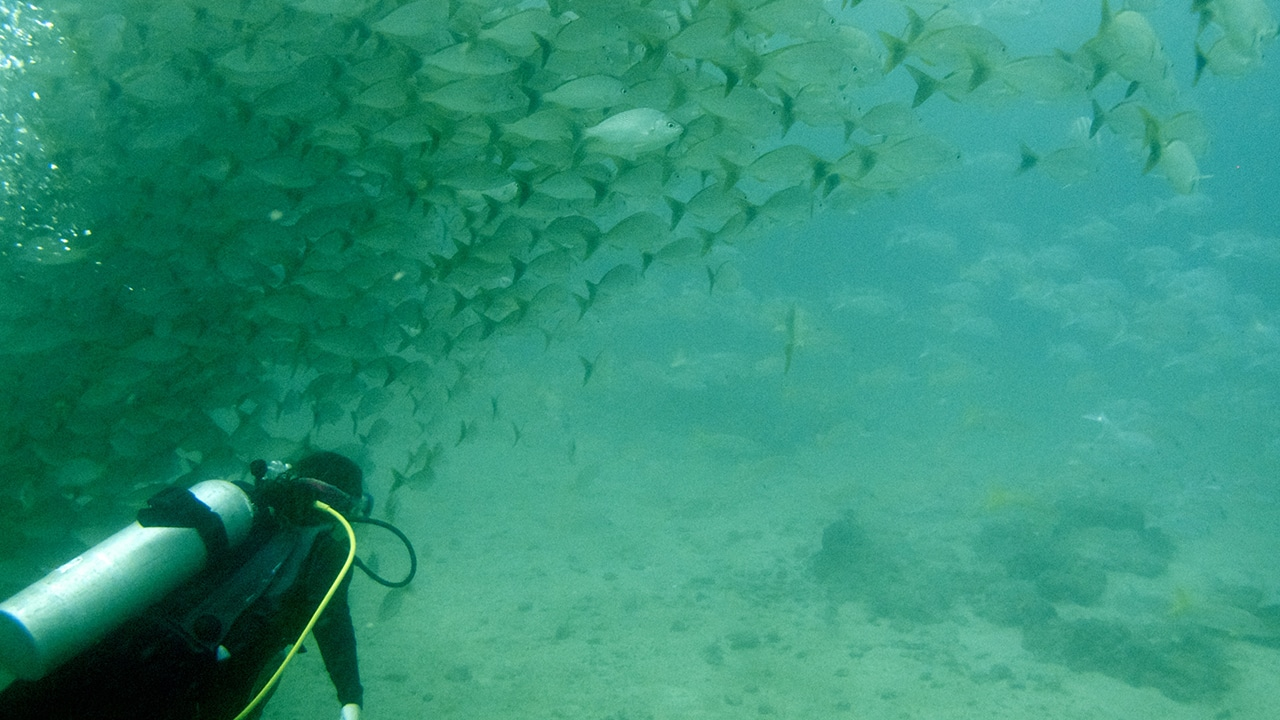 marine conservation programs