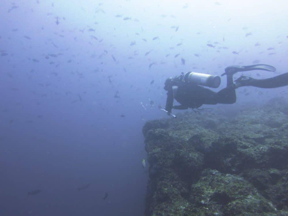 scuba diving cocos island