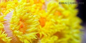 underwater naturalist instructor