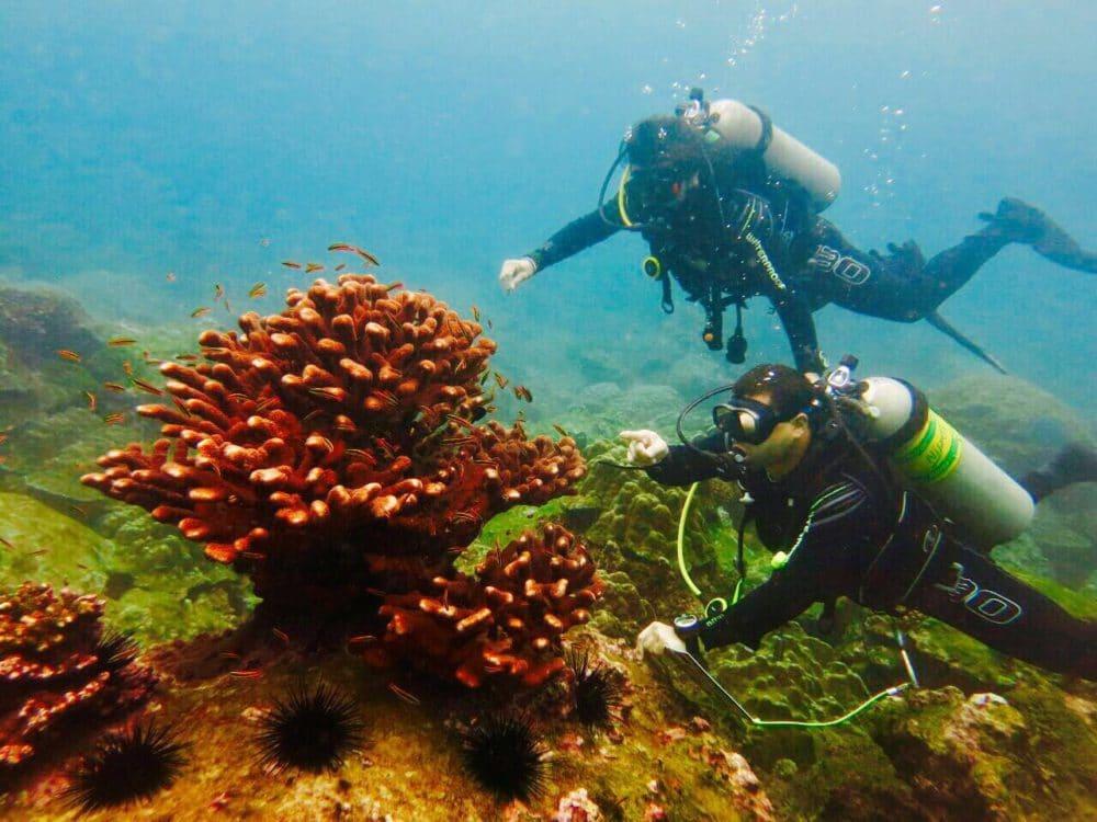 hard corals at isla del coco