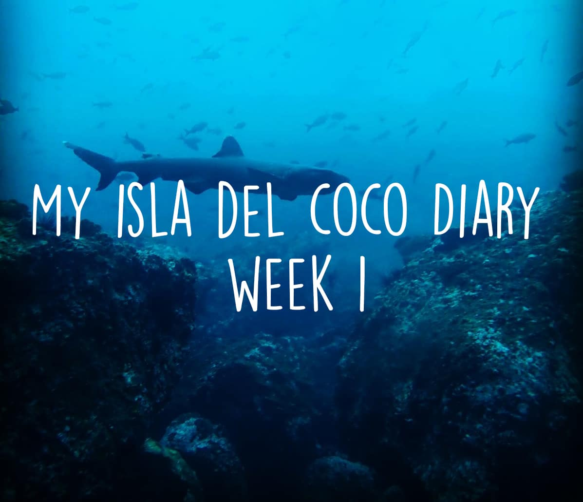 My Isla del Coco diary – What a week!