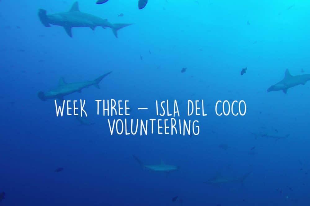 week three volunteering isla del coco