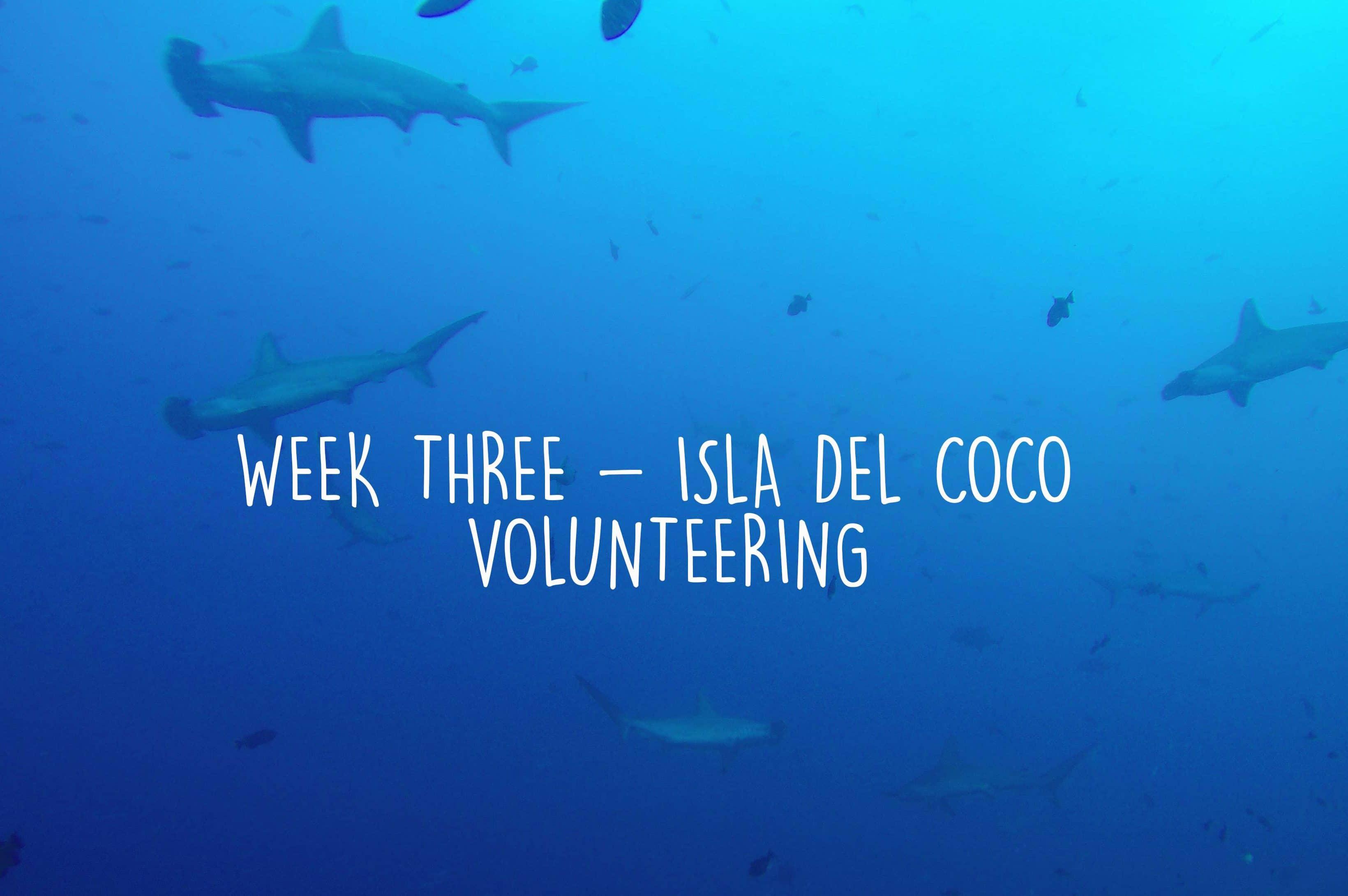 Week three as an Isla Del Coco Volunteer