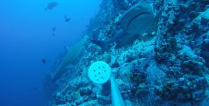 studying sharks at cocos island