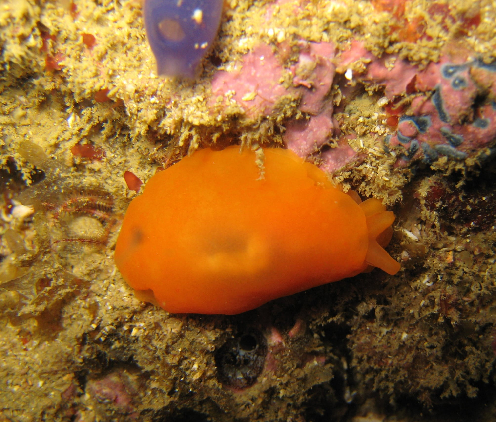 nudibranch awareness instructor
