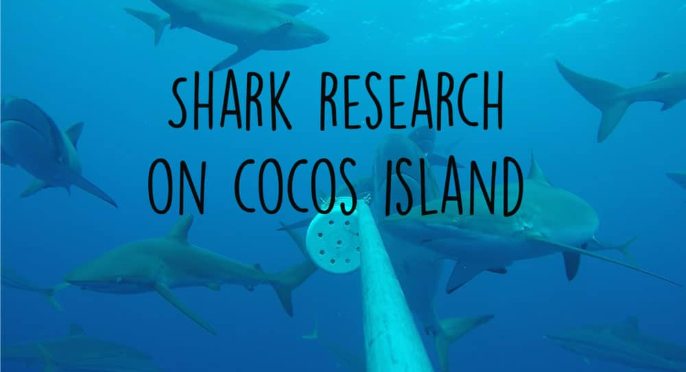 shark research cocos island