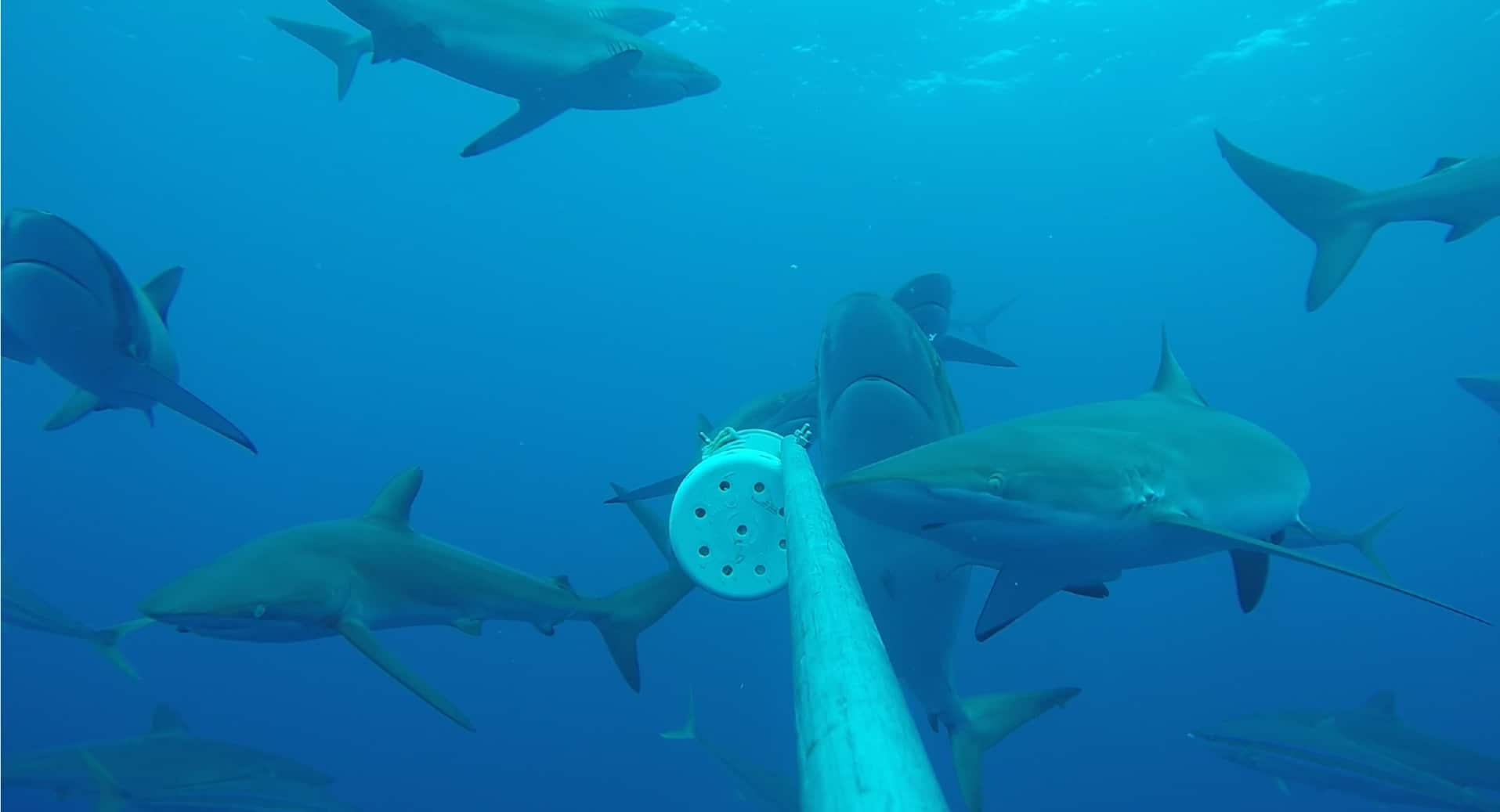shark research on Cocos