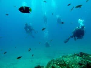 scuba diving passion into a job