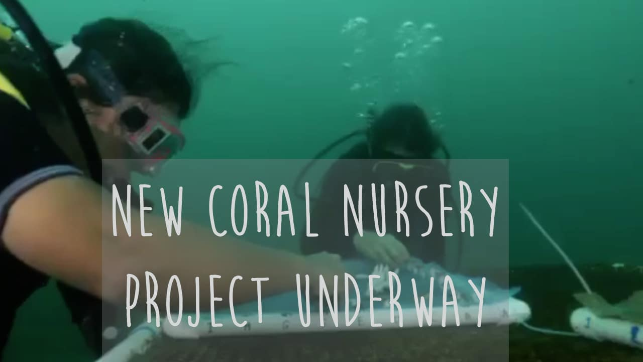 Coral fights back with Go Pro