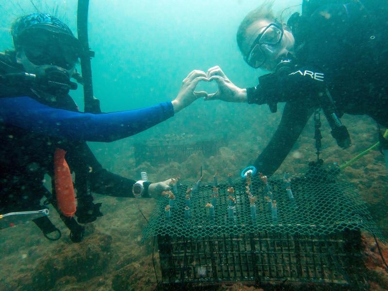 coral restoration costa rica